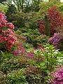 Rhododendrons at Bodnant Garden.JPG
