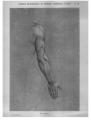 Richer - Anatomie artistique, 2 p. 93.png