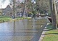 River Windrush - geograph.org.uk - 1341412.jpg