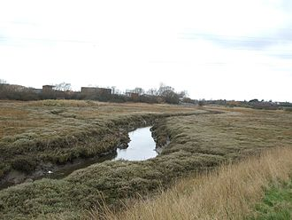 River Roach - River Roach at Stambridge Mills looking West