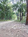 Road in modhutila.jpg