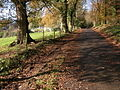 Road past Clanna Lodge - geograph.org.uk - 285410.jpg