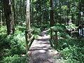 Robert Simpson Nature Trail 06.JPG