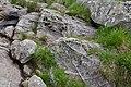 Roches striées, Estagnous.jpg