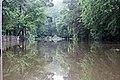 Roman Forest Flood Waters - 4-19-16 (26522945395).jpg