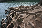 Roots can also protect the environment by holding the soil to prevent soil erosion