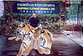 Rudolph.a.furtado with Samphran zoo tigers in Bangkok(Wednesday 21-12-2005).jpg