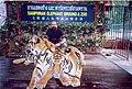 Rudolph.a.furtado with Samphran zoo tigers in Bangkok(Wednesday 21-12-2005).jpg