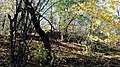 Ruiny Sanktuarium Matki Bożej Bolesnej z 1743 r., Kapliczna Góra 2018.10.31 (17).jpg