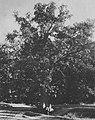 Russischer Photograph um 1893 - Sommer auf Archangelskoje (Zeno Fotografie).jpg