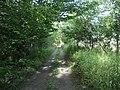 Rutland Trail, New York, July 2004.jpg