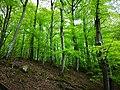 Söderåsen landscape forest.jpg