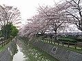 Saitama Egawa Drainage River Near Okubo Water Purification Plant 1.JPG