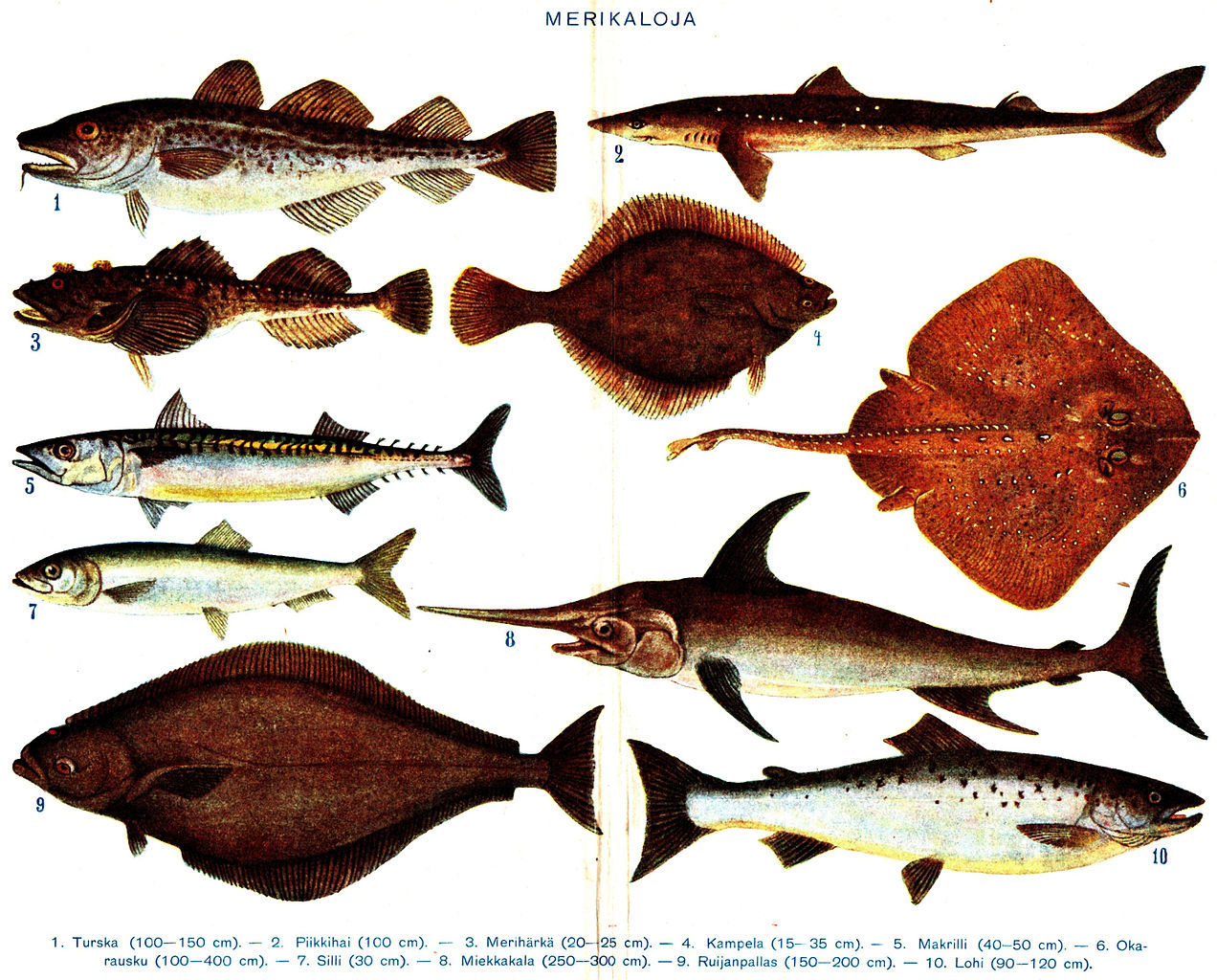 File salt water fish with finnish wikimedia commons for Brackish water fish