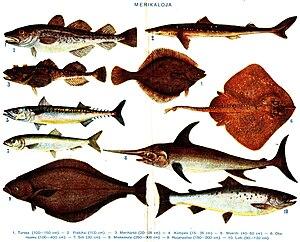 Διάφορα είδη ψαριών