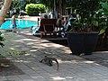 Samre, Thon Buri, Bangkok 10600, Thailand - panoramio (4).jpg