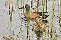 Sand Lake National Wildlife Refuge, SD (6109853801).jpg