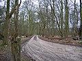 Sands Wood - geograph.org.uk - 143307.jpg