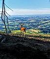 Sankt Ulrich bei Steyr, Austria - panoramio (1).jpg