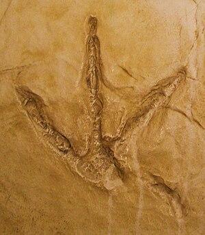 Italiano: Saurexallopus, a four toed dinosaur ...