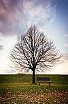 Scarborough tree.jpg