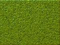 Scratch BG lizard 35.png