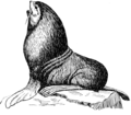 Seal (PSF).png