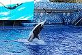 Seaworld-Orlando-Shamu-1550.jpg
