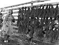 Sennegress til tørk på et stativ. Ved siden av står en kvinne. Fem mil fra Karesuando 1956 - Norsk folkemuseum - NF.05535-324.jpg