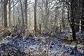 Serridge Woods - geograph.org.uk - 1632998.jpg