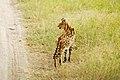 Serval-16.jpg