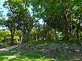 Sewell Park - Miami 03.jpg