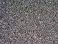 Silicon 100x (N, 111).jpg