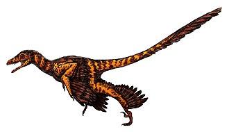 Sinornithosaurus - Artist's impression of S. millenii
