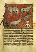 Sloane278 f.48v Elephants,Dragon,AndMandrake