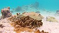 Snorkeling At Webers Joy, Bonaire (16364510325).jpg