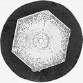 Snowflake Study (5243831044).jpg