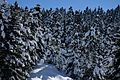 Snowy Trees 1.jpg