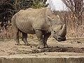 Sofia Zoo - Rhino 007.jpg