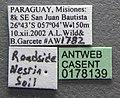 Solenopsis macdonaghi casent0178139 label 1.jpg