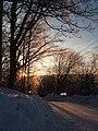 Sonnenuntergang Baum Zoeblitz.jpg