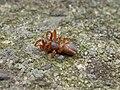 Spider-005.jpg