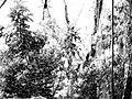 Spiders - Aranhas - Cataratas do Iguacu - Parque Nacional Iguazu - Argentina (23982168990).jpg