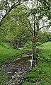 Spring Water - geograph.org.uk - 812302.jpg