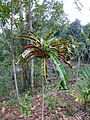Sri Lanka (Southern Province)-Vegetation (7).jpg