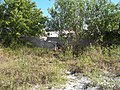 St Lucie County FL old Dixie Hwy overpass overgrowth01.jpg