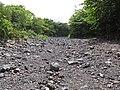 Starr-090623-1675-Terminalia catappa-habit along stream-Hana-Maui (24849137102).jpg