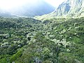 Starr-151005-0082-Aleurites moluccana-aerial view-West Maui-Maui (25679963543).jpg