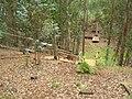 Starr 050815-3491 Grevillea robusta.jpg