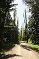 Stepanavan dendropark2 by Ohannes.jpg